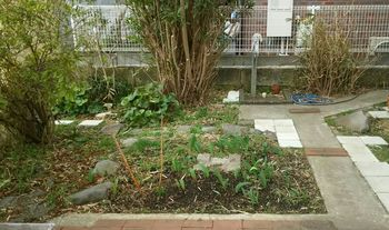 庭の花畑.jpg